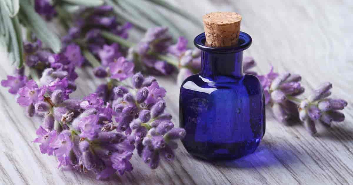 7 Lifestyle Benefits Of Lavender Essential Oil