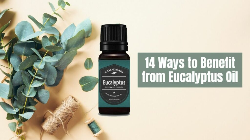 14-Ways-to-Benefit-from-Eucalyptus-Essential-Oil