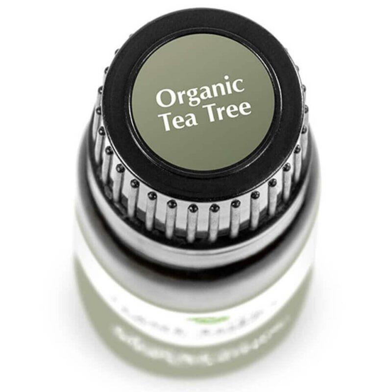 Plant Therapy Tea Tree Organic Essential Oil