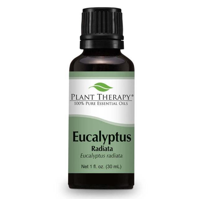 Plant Therapy Eucalyptus Radiata Essential Oil
